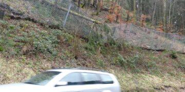 """""""Burglind"""" hat eine große Fichte auf den Zaun bei der Forellenstube geworfen.  Foto:  him"""
