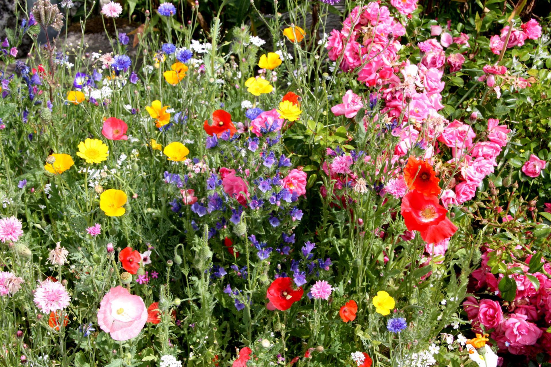 Blumensamen gibt es kostenlos bei der Stadt Schramberg. Foto: pm