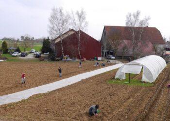 """Die Felder der """"Ackernative"""" in Fluorn-Winzeln. Fotos: pm"""