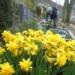 Auf dem Talstadtfriedhof. Foto: him