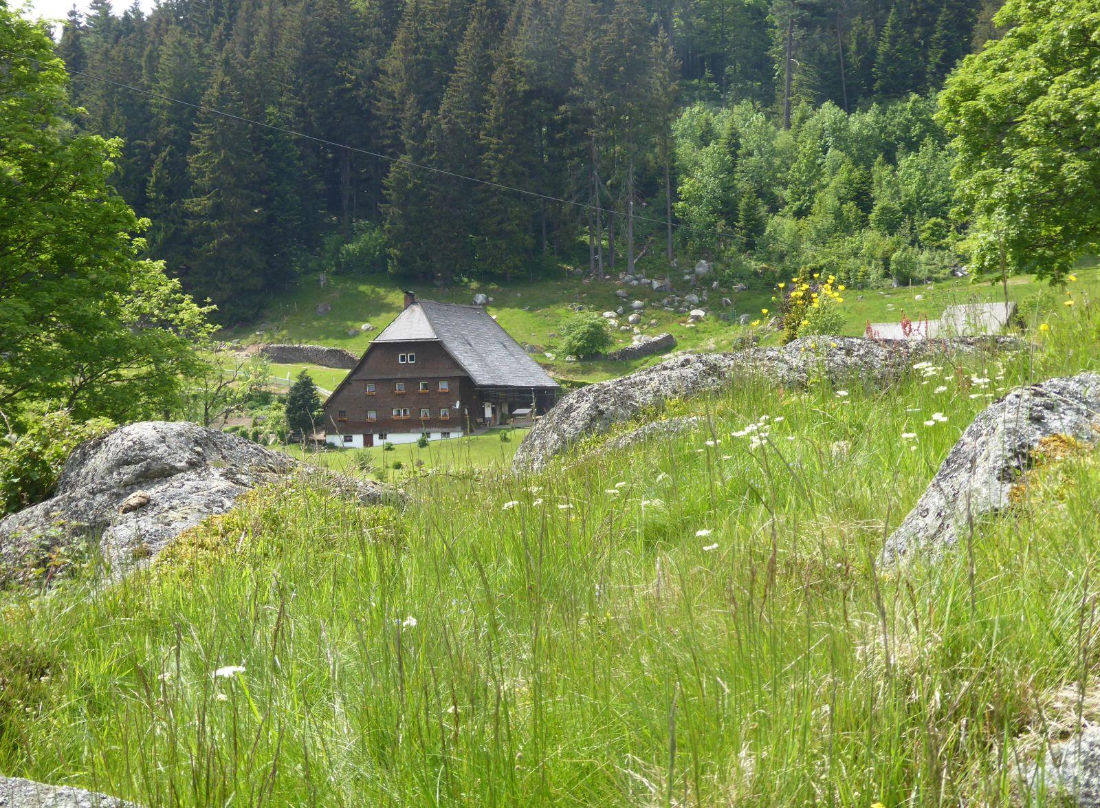 """Das Regierungspräsidium sucht """"Höfe für Biologische Vielfalt"""". Eine naturschonende Bewirtschaftung wie um diesen Schwarzwaldhof am Rohrhardsberg (Schwarzwald-Baar-Kreis) ist ein wichtiges Kriterium im Wettbewerb. Foto: Claudia Leitz/ RPF"""