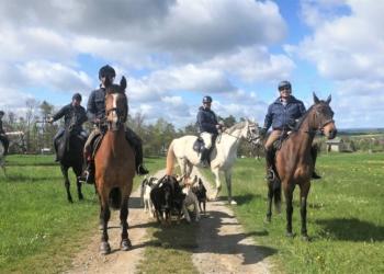 Die Reiter mit ihren Hunden beim Training. Foto: emo