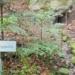 Nicht jedermanns Geschmack: Das Hinweisschild und die Kette miot Becher an der Winterbergquelle. Foto: him