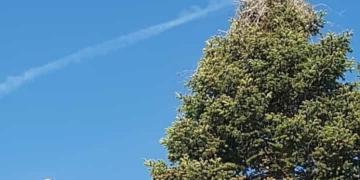 Die beiden Waldmössinger Störche, eine(r) im Nest, eine(r) auf dem Kran. Fotos: