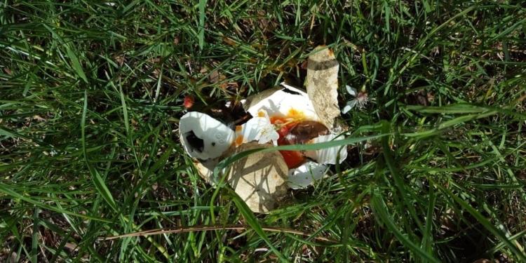Trauriges Ende: Ein kaputtes Storchenei beim Waldmössinger Storchennest.        Foto: Polet