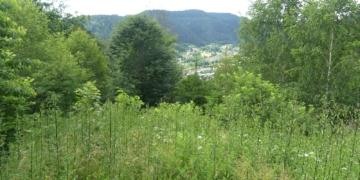 Wieder ein schöner Mischwald entstanden. Fotos: him