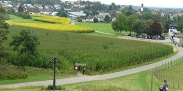 Das Maislabyrinth von oben. Foto: him