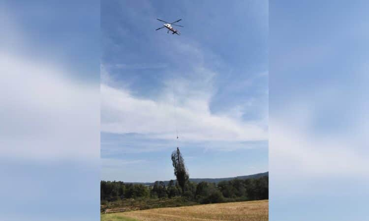 Der Hubschrauber holt die gefällten Bäume und bringt sie nach oben. Fotos: wede